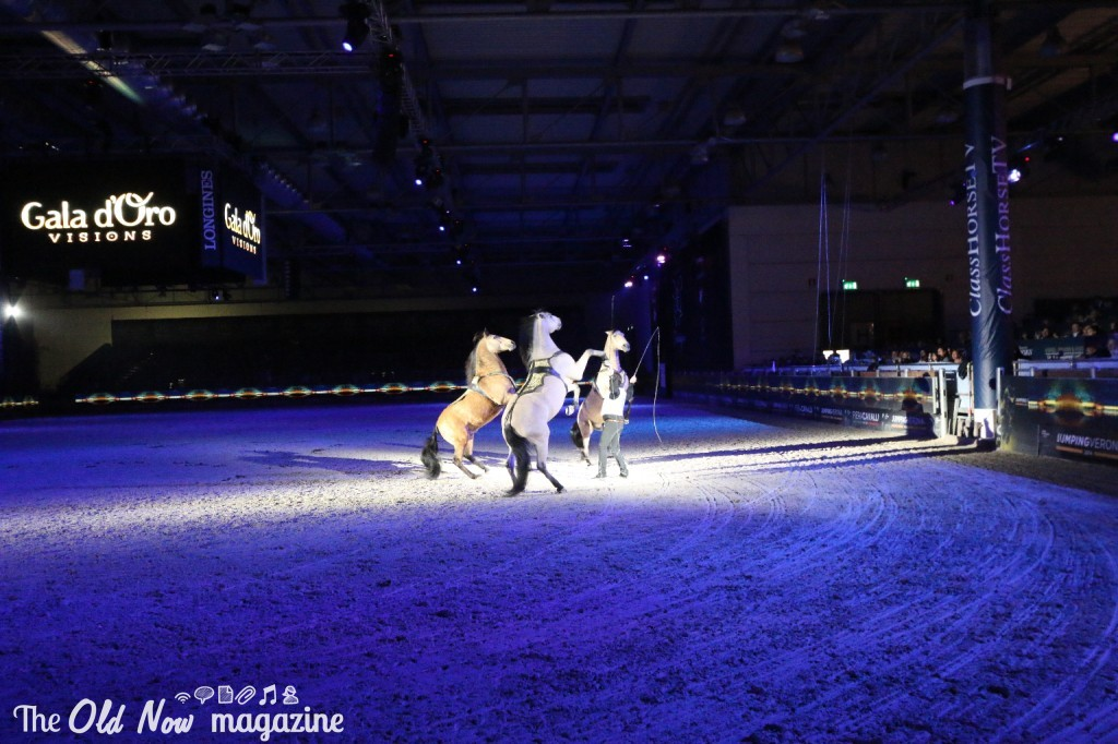 verona cavalli 2014 gmc - photo#39