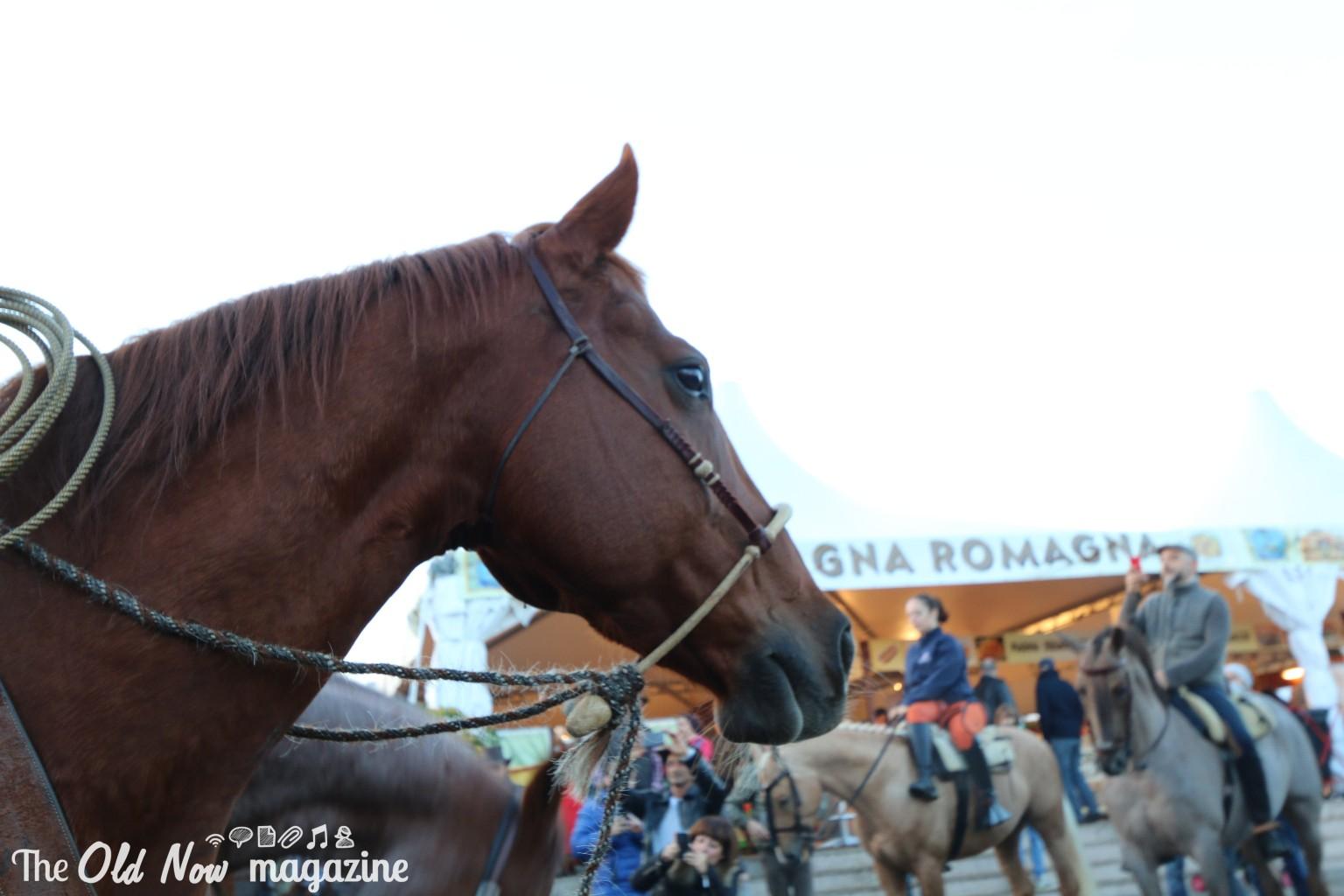 verona cavalli 2014 gmc - photo#40