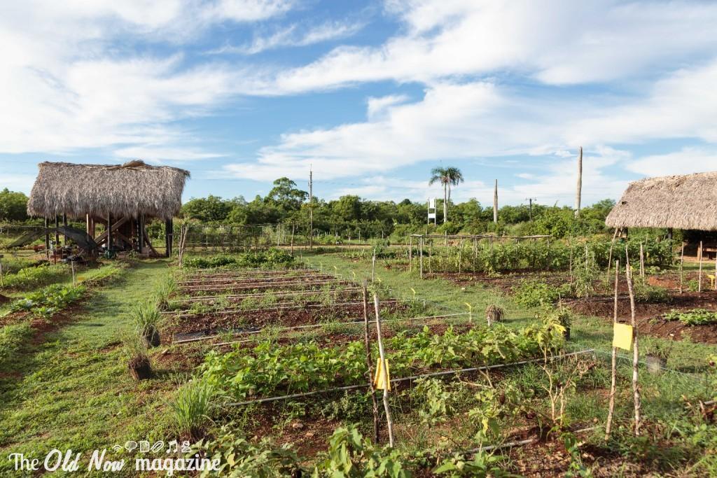 Repubblica Dominicana - 0015