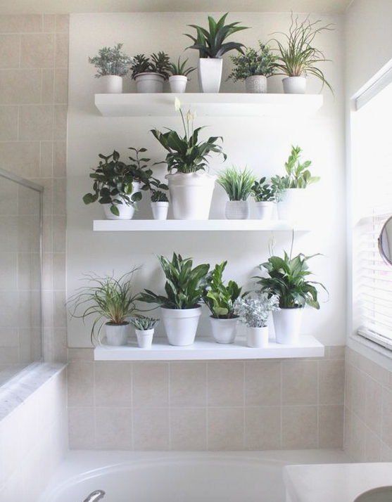 Arredare con le piante la casa theoldnow - Arredare casa con le piante ...