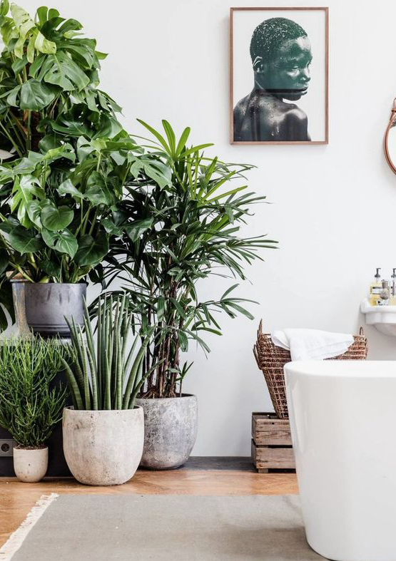 Arredare con le piante la casa theoldnow for Arredare casa con le piante